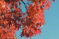 佐久山御殿山紅葉祭り11/10(金)~25(土)まで